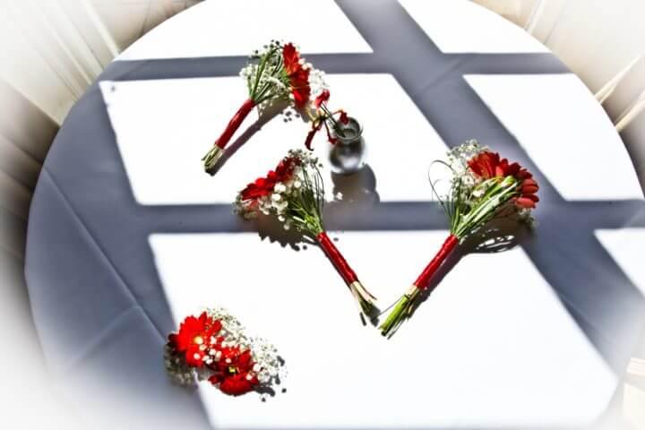 red flowers flower