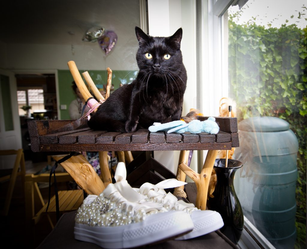 cat wedding shoes black
